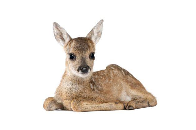 Les bebes animaux les plus mignons - Image bebe animaux ...