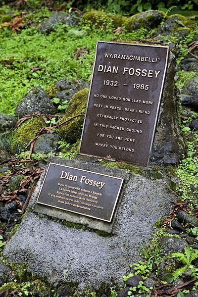 dian fossey life and death Dian fossey devoted eighteen years of her life to studying gorillas in the mountainous rainforest of central africa the real dian fossey despite dian's death.
